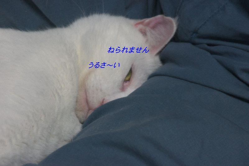 f0197682_153240100.jpg