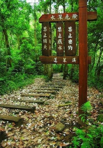 ■ 台湾 苗栗南庄郷 蓬莱渓_e0094583_21131735.jpg