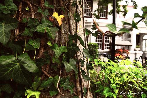 秋の横浜_c0097291_172153.jpg