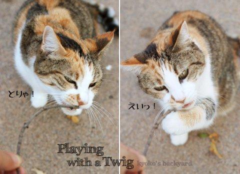 小枝で遊ぶ猫_b0253205_458265.jpg