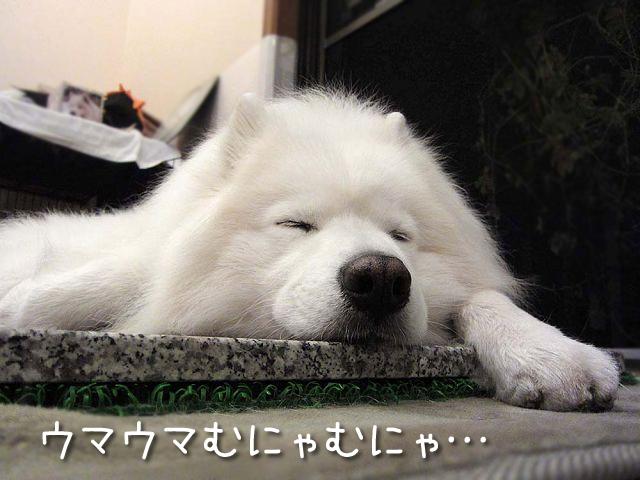 居酒屋・黒岡亭_c0062832_7111175.jpg