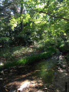 下鴨神社 はねず色の申餅(さるもち)_e0134337_17102395.jpg