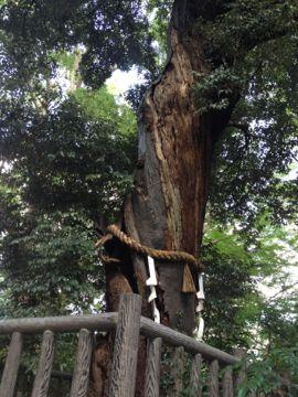 下鴨神社 はねず色の申餅(さるもち)_e0134337_17133036.jpg
