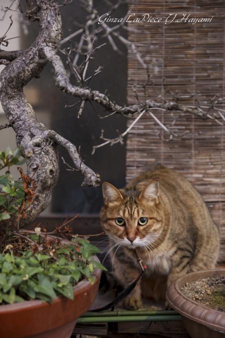 猫のいる風景 ご近所の茶トラちゃん _b0133053_182817.jpg