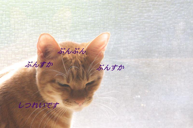 f0197682_19494240.jpg