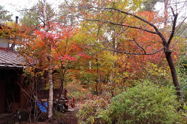 秋深し 生きる為にも 木を伐るか_f0145483_2051746.jpg