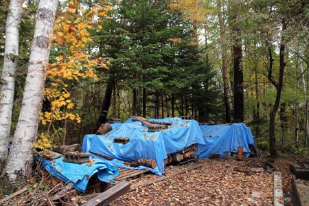 秋深し 生きる為にも 木を伐るか_f0145483_20561025.jpg