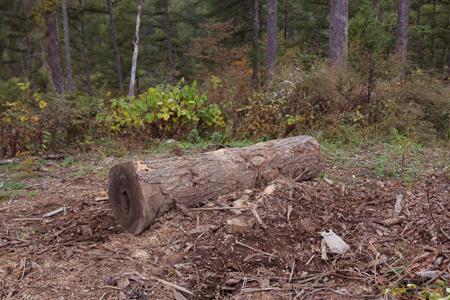 秋深し 生きる為にも 木を伐るか_f0145483_2058896.jpg