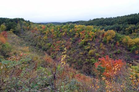 秋深し 生きる為にも 木を伐るか_f0145483_2134193.jpg