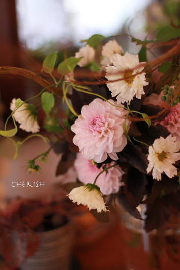 秋桜_b0208604_1818914.jpg
