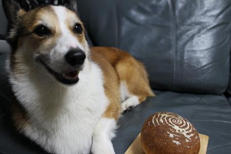 yummy のパン_f0155118_11381854.jpg