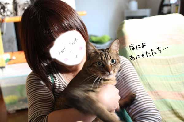 yoikoさんのおうちに♪_b0223446_16104060.jpg