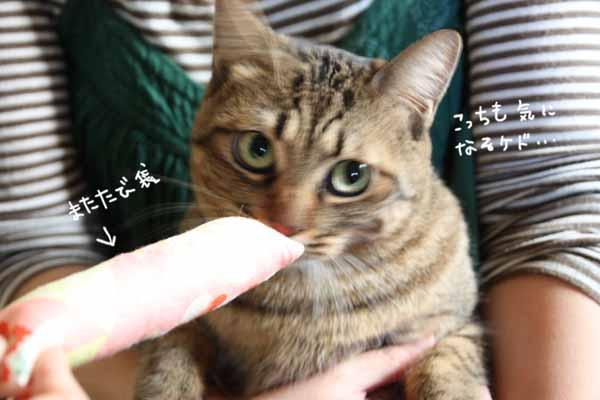 yoikoさんのおうちに♪_b0223446_16121158.jpg