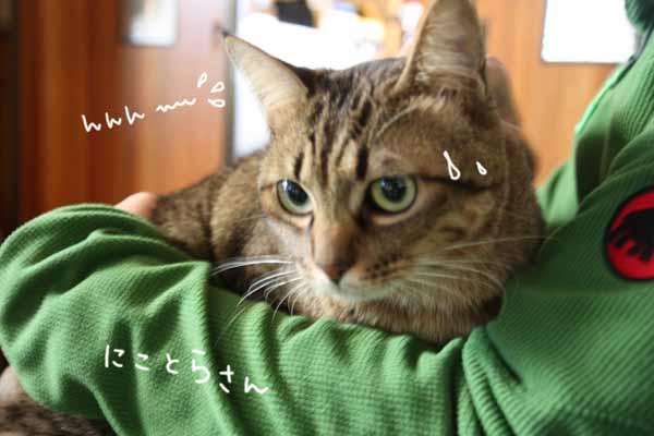 yoikoさんのおうちに♪_b0223446_16142022.jpg