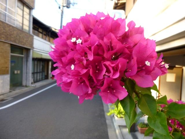 京都   (最終編  晴明神社 と  色々 )_d0105967_1923587.jpg