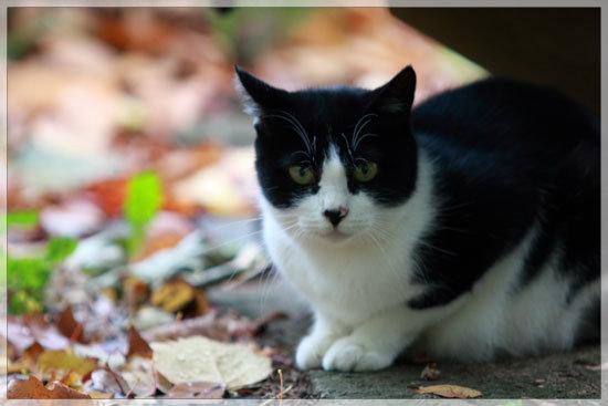 温泉街に生きる猫_e0235910_9143760.jpg