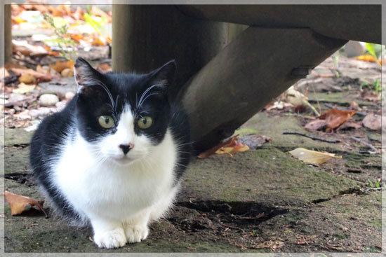 温泉街に生きる猫_e0235910_9255623.jpg