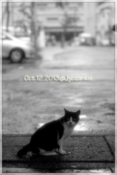 温泉街に生きる猫_e0235910_929991.jpg