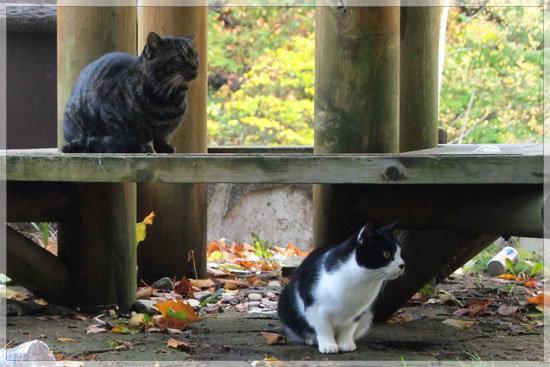 温泉街に生きる猫_e0235910_9412454.jpg
