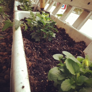 花壇の植え替え_a0118722_10452228.jpg