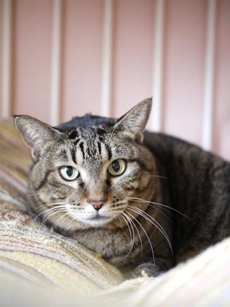 猫のお友だち 珊瑚ちゃん編。_a0143140_13572187.jpg