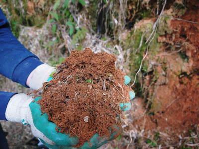"""干したけのこ 無農薬、有機栽培で育てられた""""たけのこ畑""""で育った、安心・安全なたけのこです_a0254656_17365250.jpg"""
