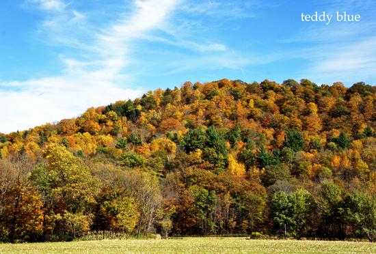 fall foliage in Vermont  バーモントの紅葉_e0253364_8471821.jpg