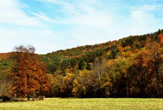 fall foliage in Vermont  バーモントの紅葉_e0253364_8484483.jpg