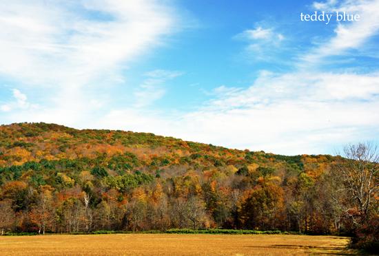 fall foliage in Vermont  バーモントの紅葉_e0253364_8491781.jpg