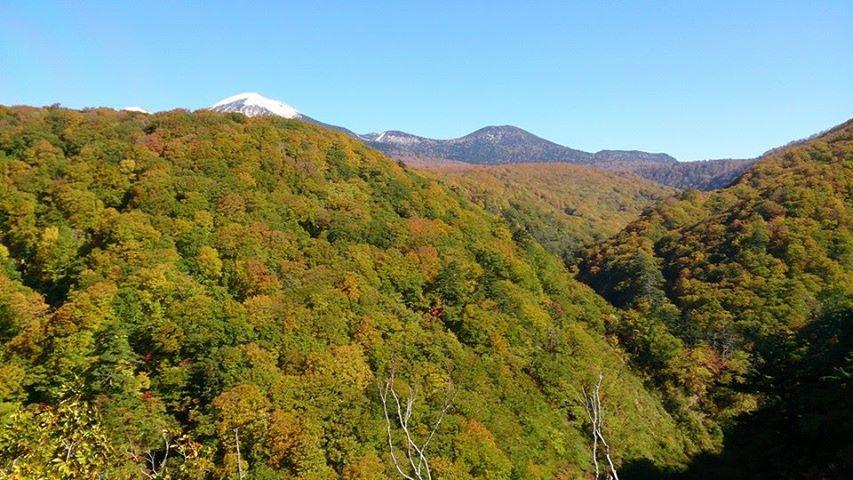秋の味覚_f0205367_10445872.jpg