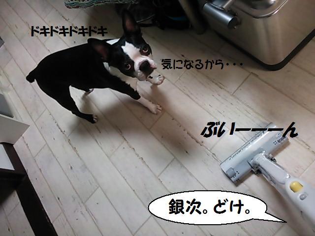 ★掃除機へのリアクション★_d0187891_15515050.jpg