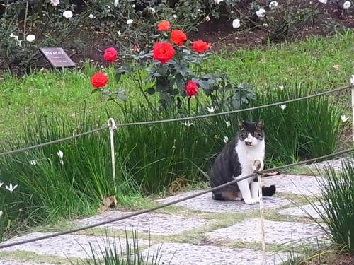 バラ園のネコさん♪_b0105897_23305585.jpg