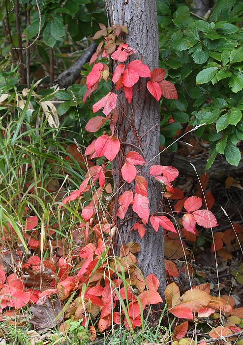 秋色の森のエゾフクロウ_c0113597_1692993.jpg