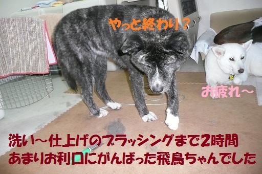 f0121712_1033919.jpg