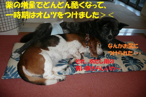 f0121712_14311246.jpg