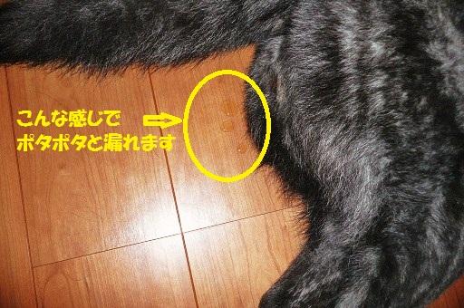 f0121712_1452991.jpg