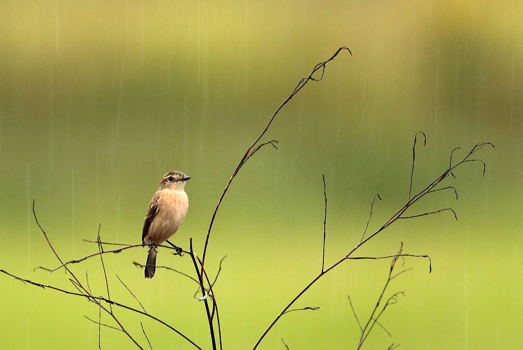 雨に濡れて_d0074828_22152942.jpg