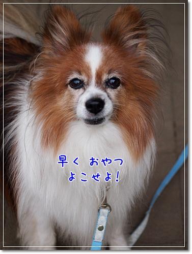 d0013149_004933.jpg