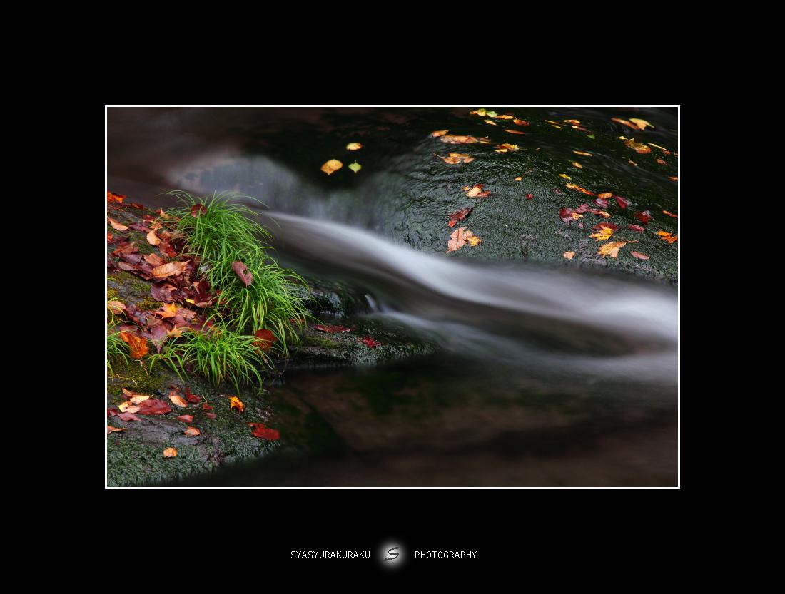 秋の彩り_c0253556_5384444.jpg