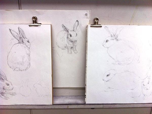 ウサギのデッサン/基礎科_f0227963_10255090.jpg