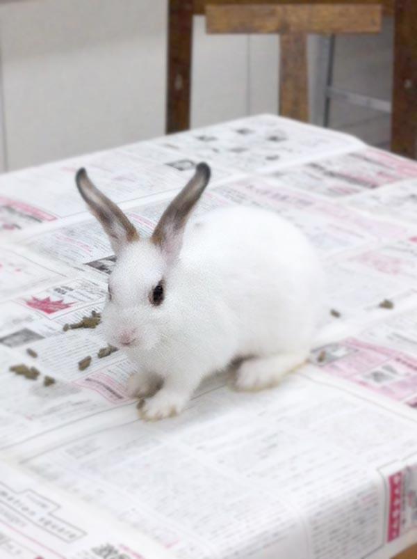 ウサギのデッサン/基礎科_f0227963_10262148.jpg
