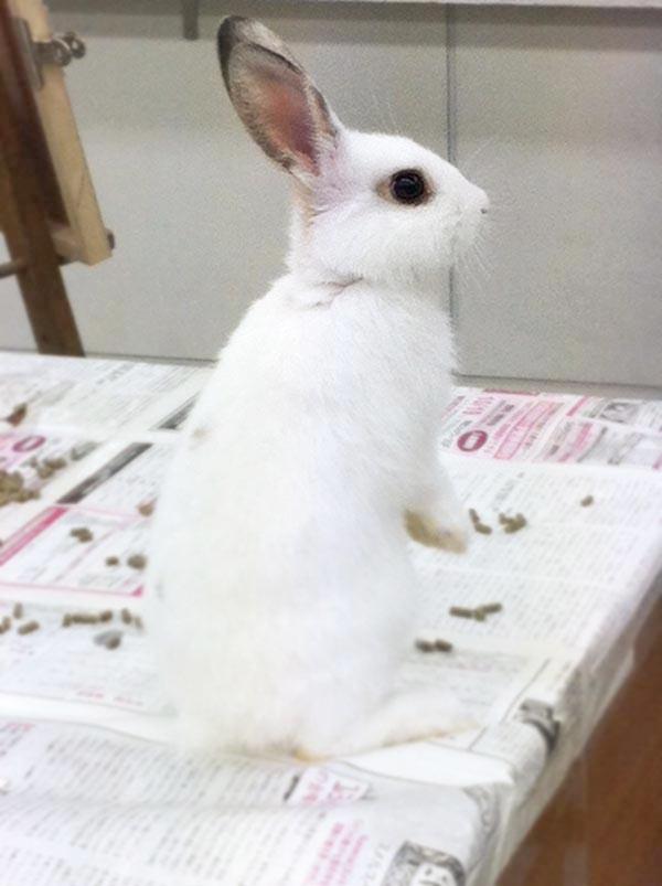 ウサギのデッサン/基礎科_f0227963_10263669.jpg