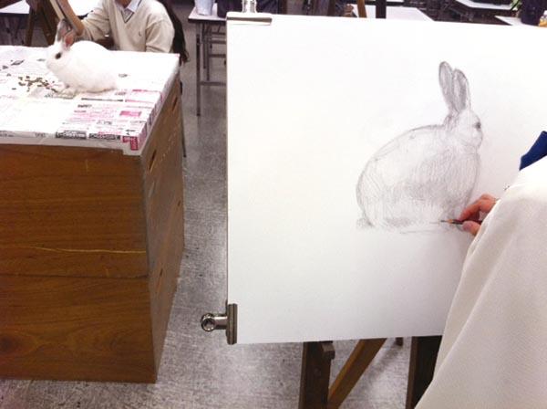 ウサギのデッサン/基礎科_f0227963_1026628.jpg
