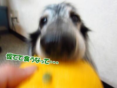 d0020869_1644260.jpg