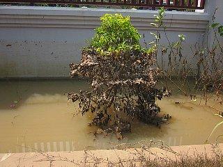 洪水その後_d0113490_23104530.jpg