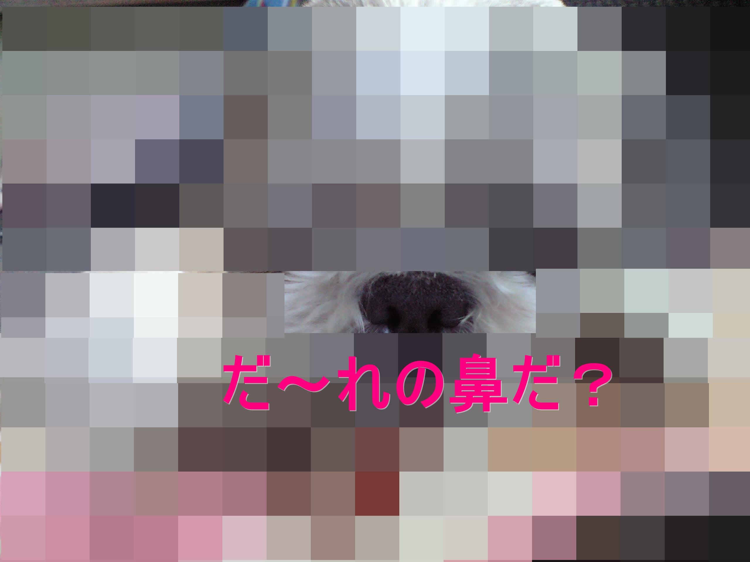 b0124693_8345455.jpg