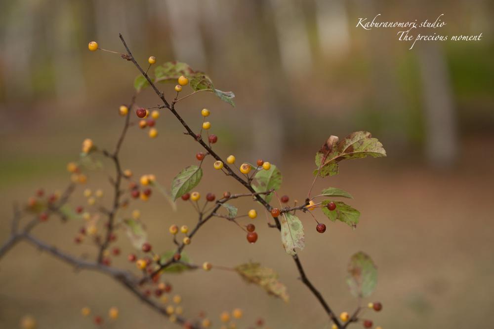 初秋の白樺林_c0137403_16574835.jpg