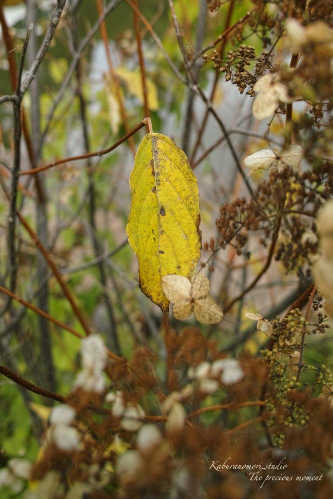 初秋の白樺林_c0137403_16584359.jpg