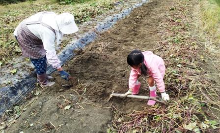 2013 収穫の秋 ~さつま芋掘り~_f0163105_1444305.jpg