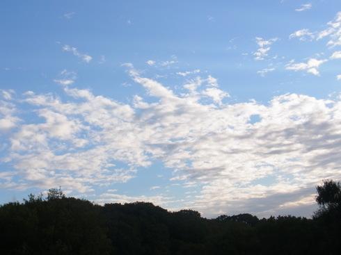 埼玉中部                    キノカワガ初見2013/10/26①_d0251807_16545578.jpg